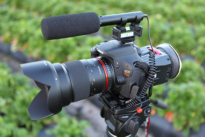 Rokinon 35mm f/1.4 Lens Review at the Plant City Strawberry Festival 2012
