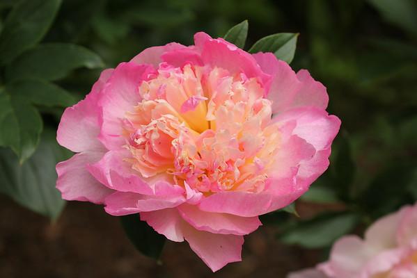 Alaska Trip - Botanical Garden - 7/17/14