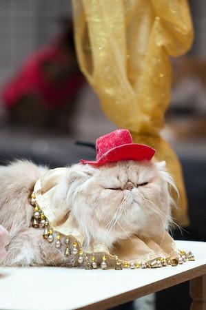 TICA Jazzy Cat Show