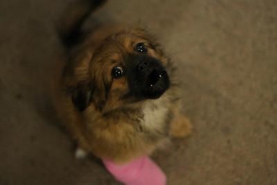 Maridons Puppy