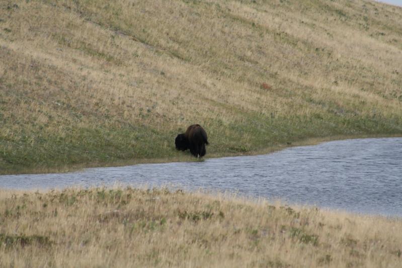 20110829 - 058 - WLNP - Bison Paddock.JPG