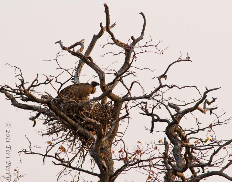 bird (14).jpg