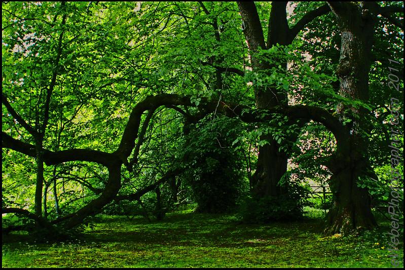 39 eWeberPhotographer.com 216 526 4767 .jpg