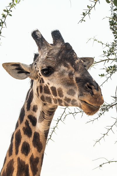 Tanzania_Safari-best-95.jpg