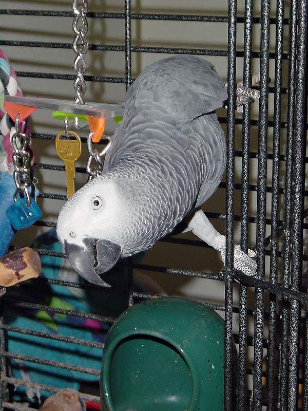 Birds with Sony DSC-P1