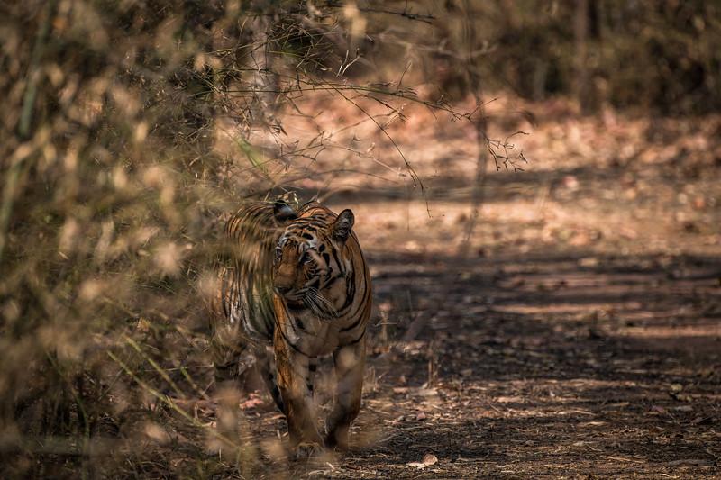 India_April_2019-1768.jpg