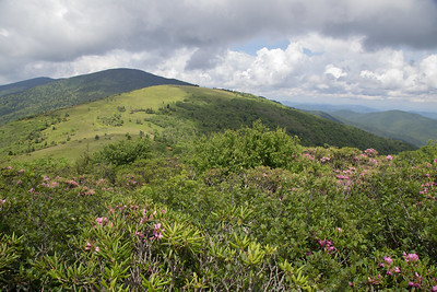 Roan Mountain, June 2017