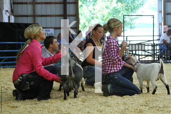 2012 Tipton County - Goats