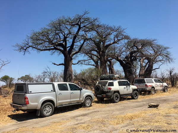 Baobab forest