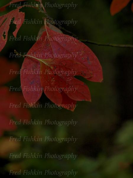 leaf couple.jpg