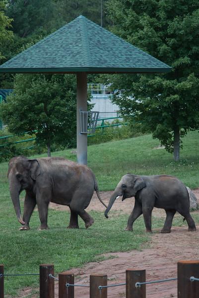 Syracuse Zoo August 2020-13.jpg
