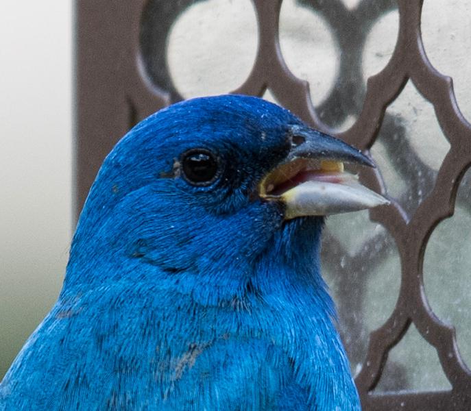 05-10-2019-birds_(12_of_12).jpg