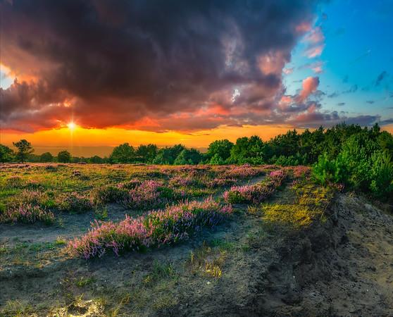 Fine Art natuur foto van bloeiende paarse heide aan het einde van de zomer.