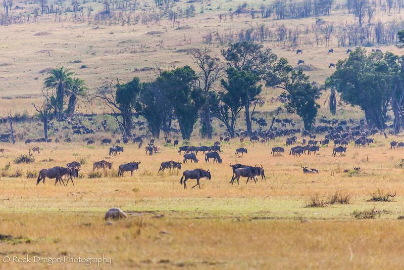 South_Serengeti-62.jpg