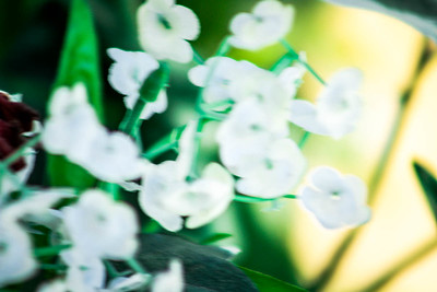 """""""Delicate White Blossoms"""" (photography) by David Fleshman"""