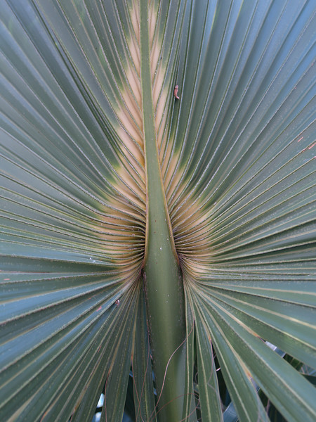 Blue Spring State Park, Florida