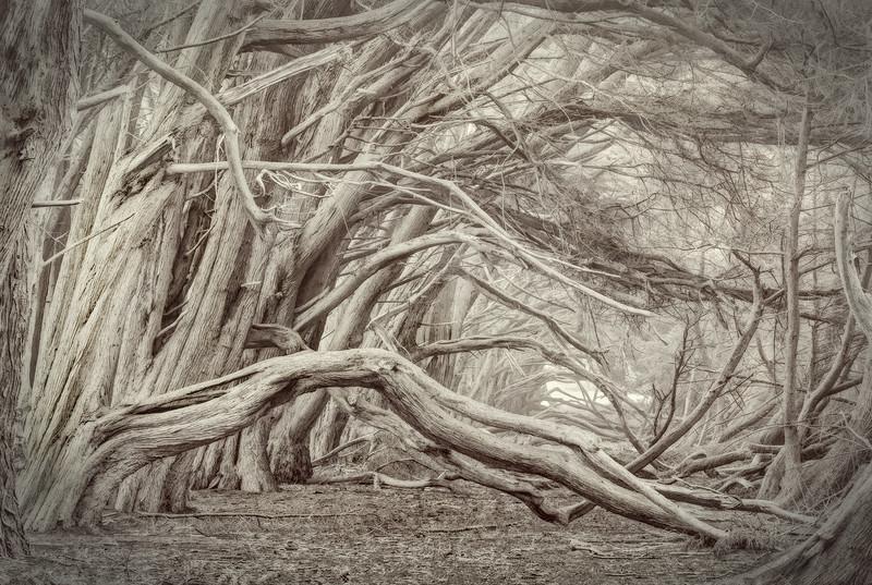 Madera de Cypress, Sea Ranch, California