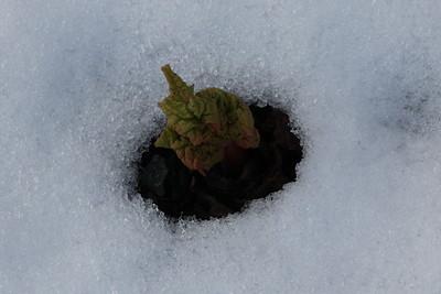 Winter Garden - 24 & 31 January 2015