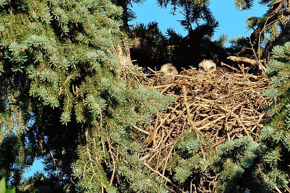 7 2011 July 23 Hawk Nest