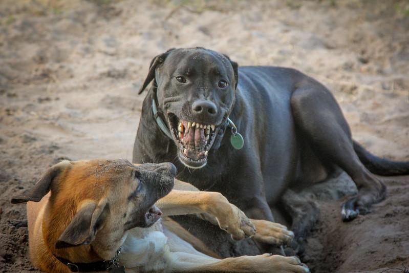 DogPark110313-3409