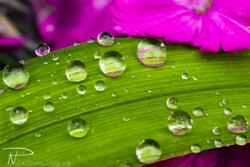 Water Drops in Garden-6.jpg