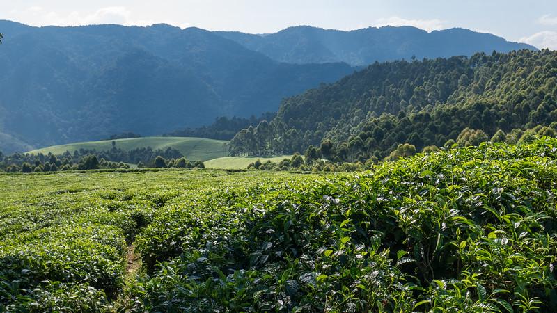 Nyugwe-Rwanda-6.jpg