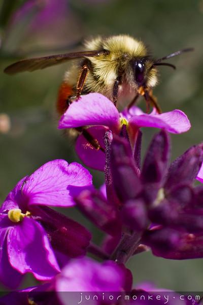 06.12.11 - Bellevue Botanical Gardens