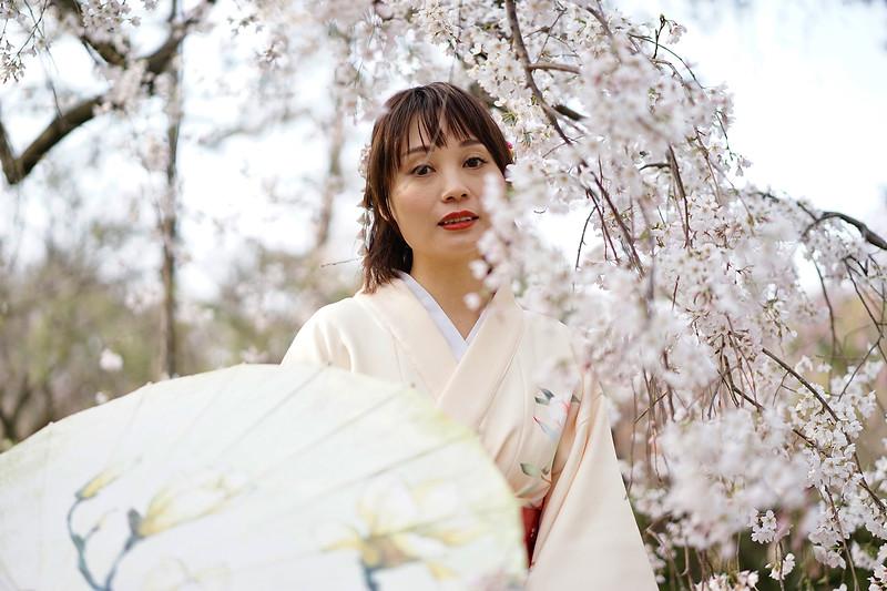 Sakura season; Kyoto, Japan