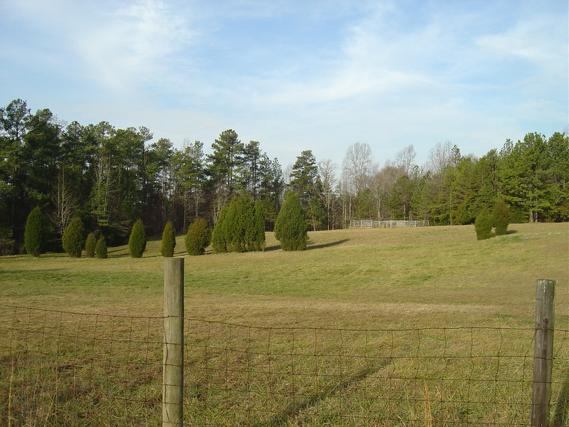Picture of field when we bought it, before new horse fence.