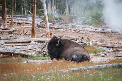 Yellowstone Sulphur Caldron