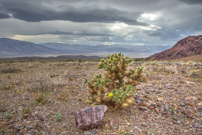 Cactus-Death-Valley-Scene-SingleShot-Beechnut-Photos-rjduff.jpg