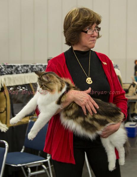 CatShow2014051.JPG
