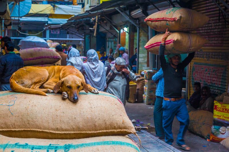 India-382.jpg