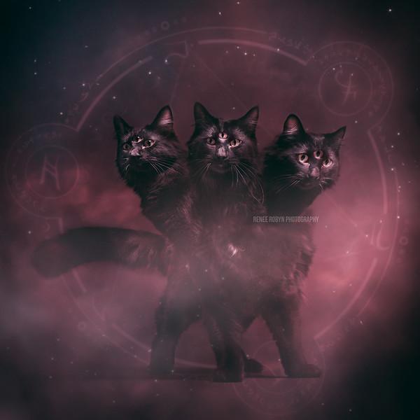 Cat-2077WEB.jpg