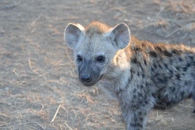 7-15-2015 Leopard Hills Rhino Bush Walk