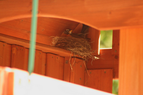 Our Bird Friend -- May 20 2008