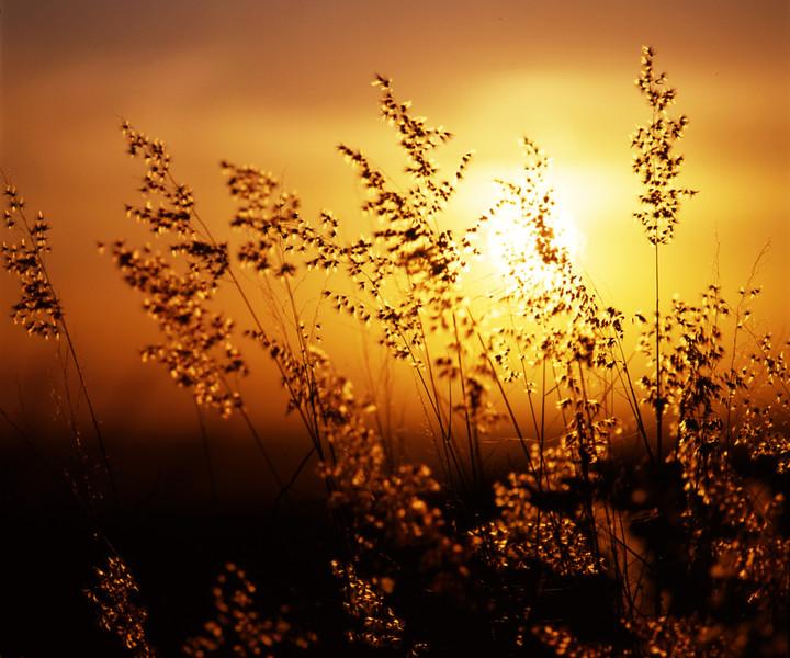 Sun Through Weeds.jpg