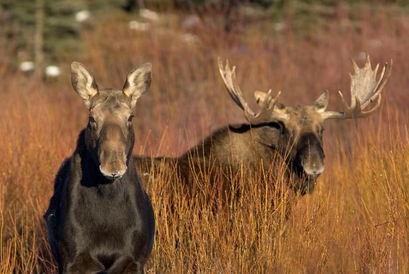 moose005.jpg