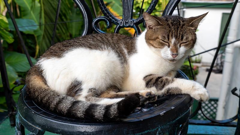 Florida-Keys-Key-West-Hemingway-Home-Cats-05.jpg