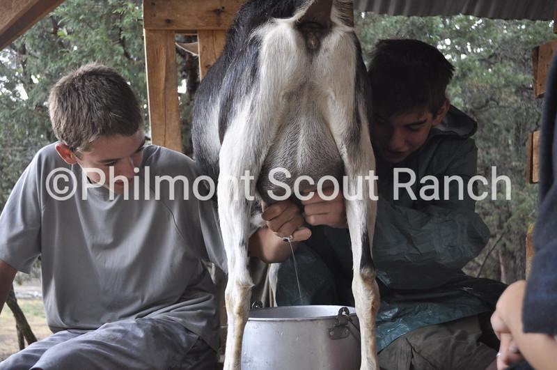 Scouts milking a goat at Abreu.JPG