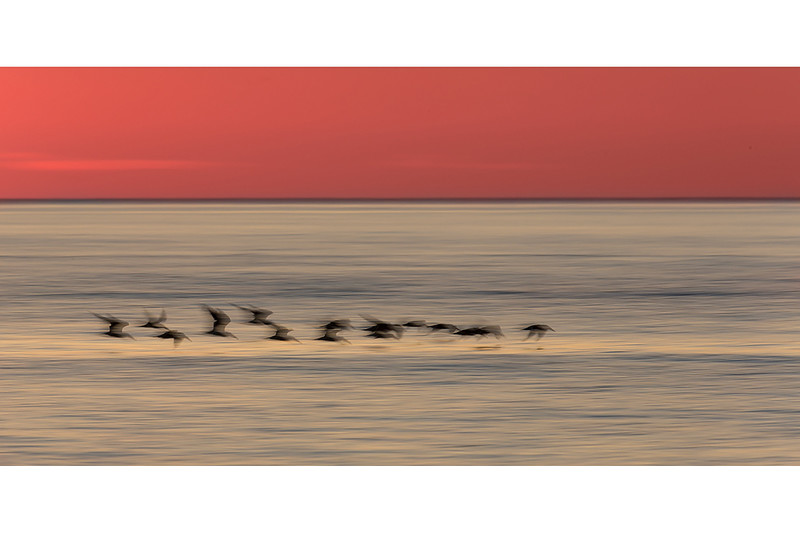 Sunset Skimmers