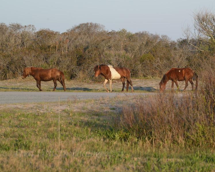 Horses 2 05_02_18.JPG