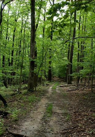 set 3 May woods pond good 2011