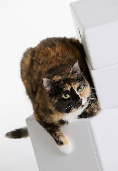 cats-92.jpg