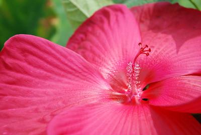 Arkansas Flowers