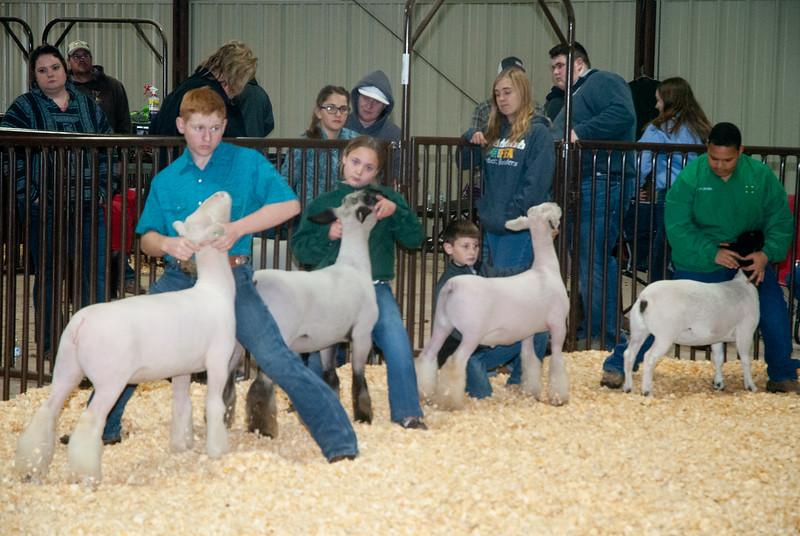 kay_county_showdown_sheep_20191207-111.jpg