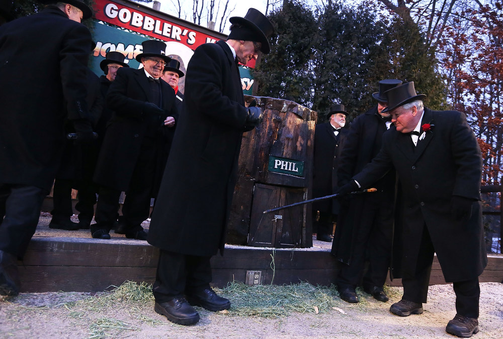 Description of . President Bill Deeley (R) of Punxsutawney's 'Inner Circle' tap on the door of Punxsutawney Phil's burrow as he and groundhog co-handlers John Griffiths (2nd R) and Ron Ploucha (3rd L) entice Phil out during the 127th Groundhog Day Celebration at Gobbler's Knob on February 2, 2013 in Punxsutawney, Pennsylvania. The Punxsutawney 'Inner Circle' claimed that there were about 35,000 people gathered at the event to watch Phil's annual forecast. Phil did not see his shadow and predicting an early spring. (Photo by Alex Wong/Getty Images)
