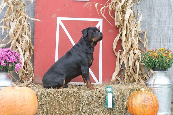 Del-Otse-Nango KC Farm Dog 10-3-2020