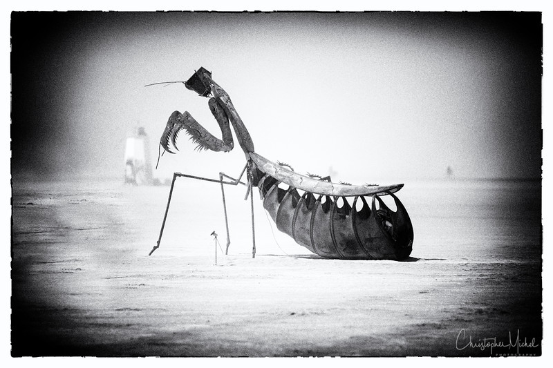 Praying Mantis at Burning Man 2012