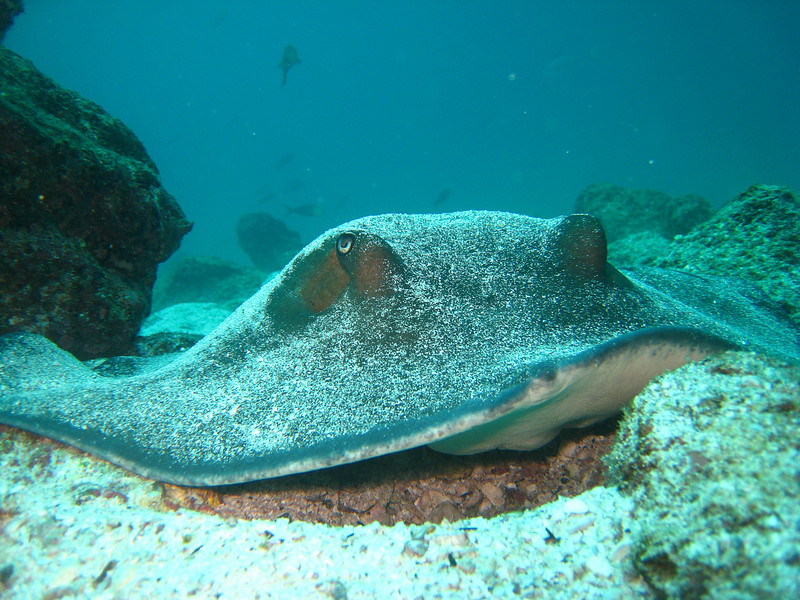 Diving in the Galapagos (168 of 392)